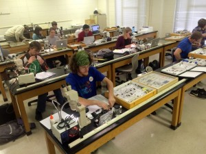 Insect Taxonomy class working on collections