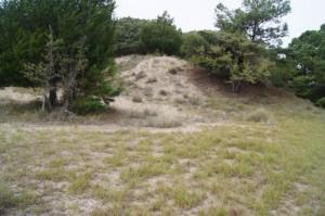 Sapelo 2011 secondary dunes 2