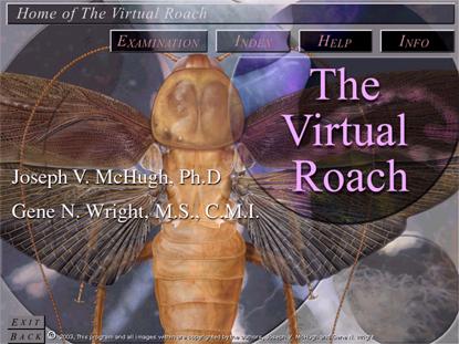 Virtual roach
