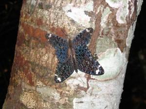 bolivia 2005 304