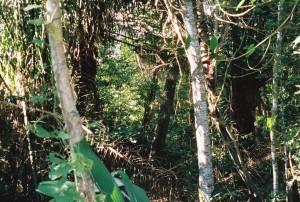 bolivia 2005 327