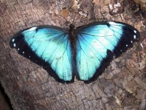 bolivia 2005 413