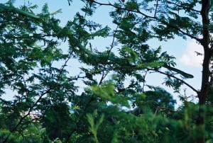 bolivia 2005 424