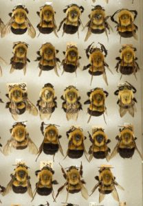 72px_bees1