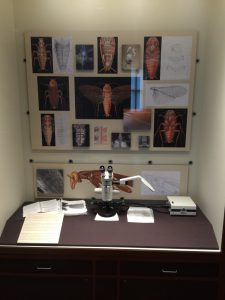 Exhibit of Virtual Roach Project at Hargrett Library, Summer 2016